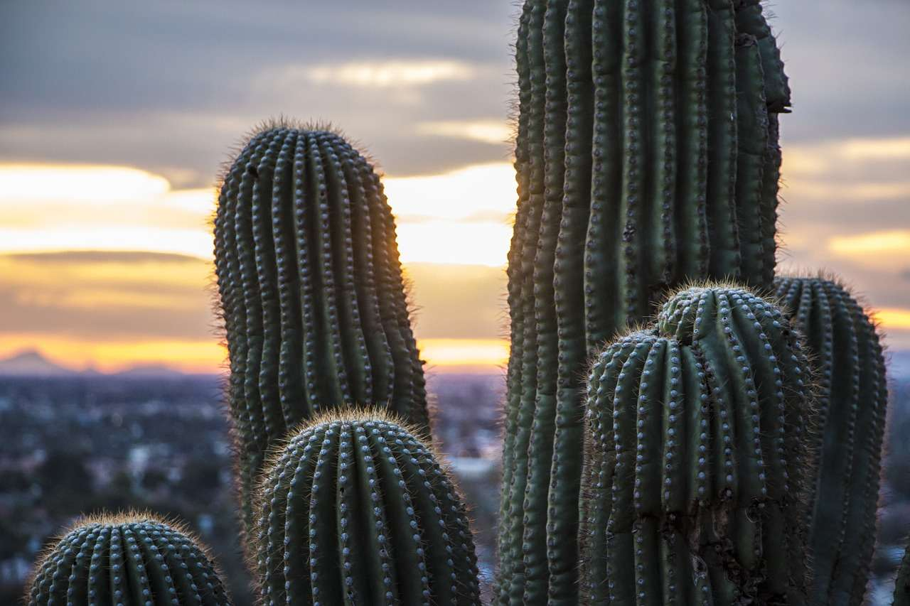 property management rental homes nearby these cactus on the sunset of Phoenix, AZ